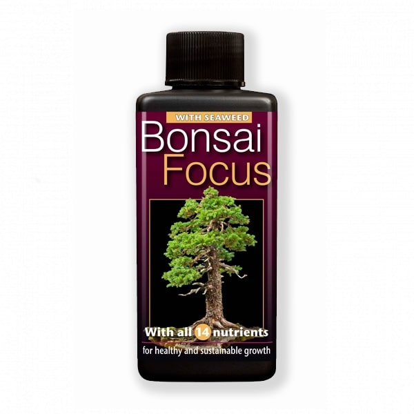 Bonsai-Focus-300-ml-right-382x1000